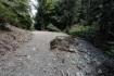 林道は途中何箇所か崩れていました。珍…