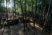 雑木林は蚊が群がって来て痒いので竹林…
