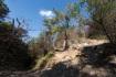 林道からたった10分で登りきりました…