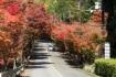 嵐山高雄パークウェイは紅葉がすごいで…