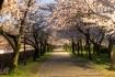 桜シーズンになると昼夜問わず人が多い…