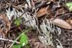才ヶ原林道の車道脇。イノシシに掘り返…