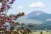 桜と阿蘇山