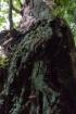 シマサルスベリの幹にポツポツと茶色い…