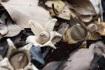 ツチグリの成菌と老菌。ツチグリの成菌…
