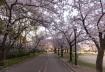 まだ朝8時前で人の少ない桜ノ宮へとや…