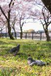 暖かな日差しを浴びて鳩も気持ちよさそ…