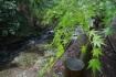 青々とした紅葉。水に濡れて綺麗な緑色…