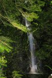 箕面の滝のホタルが最盛期