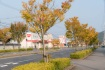 気が付けばもう11月。街路樹などすっ…